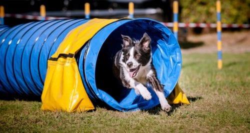 Samen werken met je hond in de combicursus