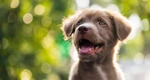 Samen werken met je hond in de puppycursus